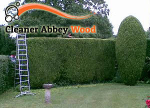 Hedge Maintenance Abbey Wood